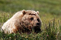 Alaska et Yukon Territory : sur les traces de Jack London
